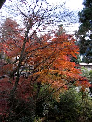温泉寺近くの紅葉