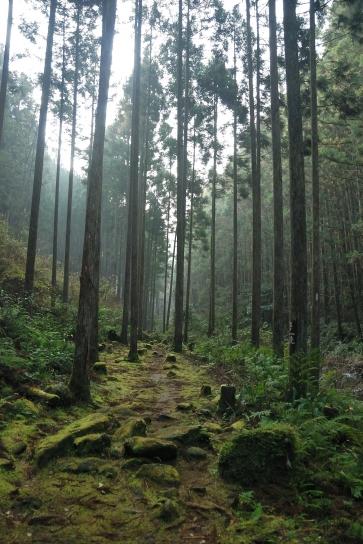 桑ノ木の滝遊歩道