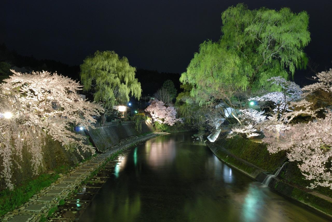 夜桜 (2008)