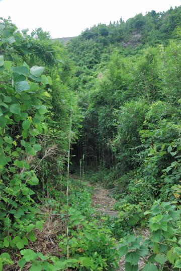 ジャングルをかきわけて