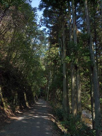 のんびりと林道歩き