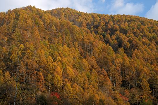 黄金色の山