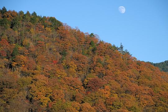 秋を追いかけて