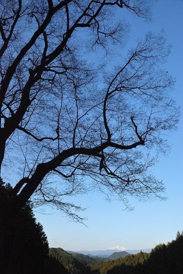 嶽見桜(2009年)